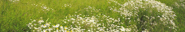 Gras & Wiese