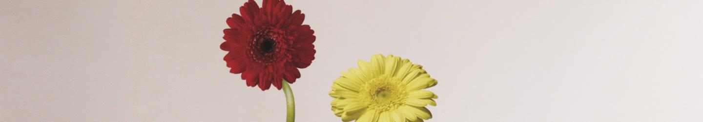 Blumen & Tiere