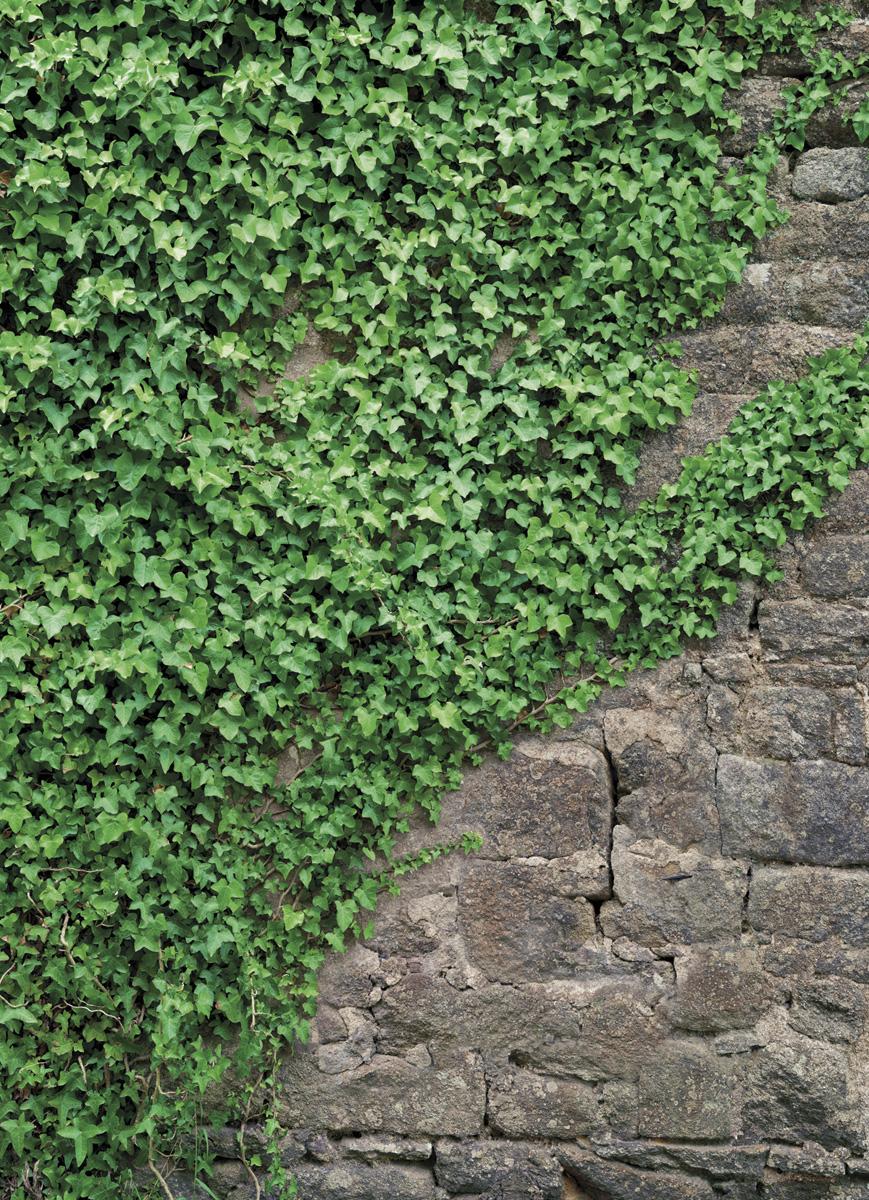 """Fototapeten National Geographic : , National Geographic und Melli Mello. Fototapete """"Ivy"""" von Komar"""