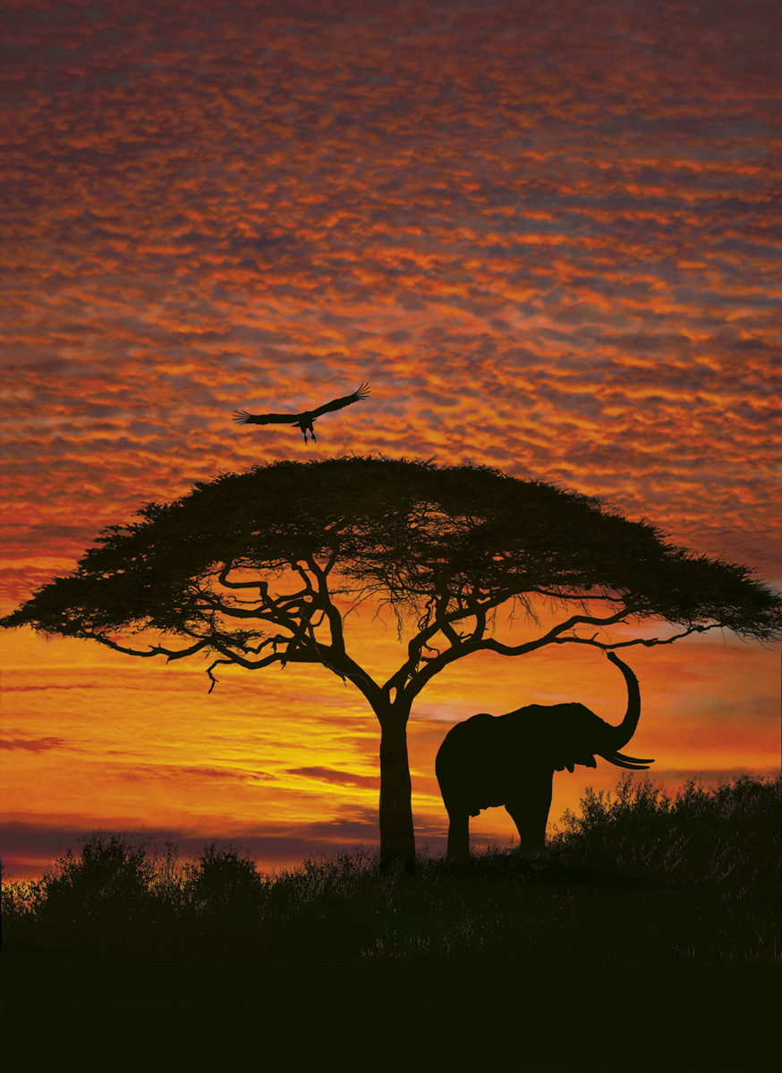 """Fototapeten National Geographic : National Geographic und Melli Mello. Fototapete """"African Sunset"""" von"""