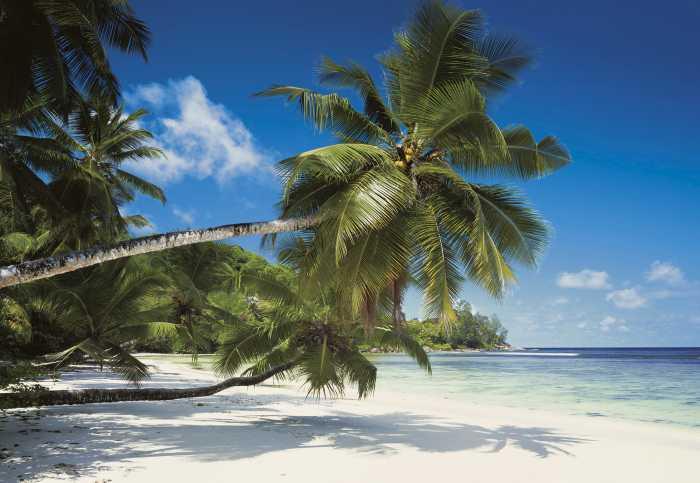 Fototapete Coconut Bay