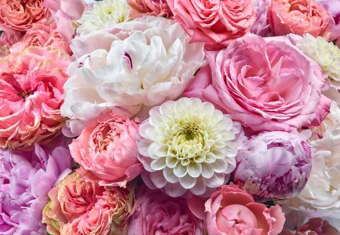 Fototapete Vibrant Spring