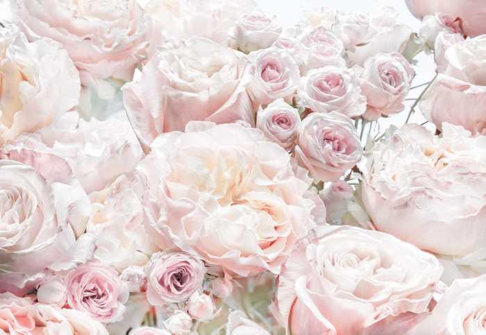 Fototapete Spring Roses