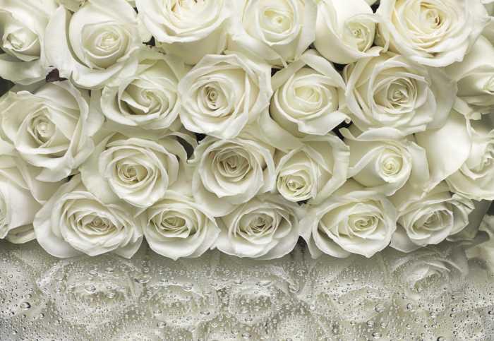 Fototapete A la Rose