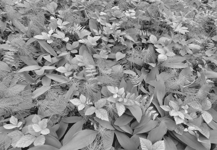 Fototapete Forest Floor