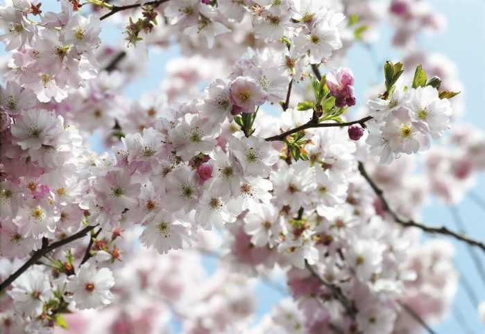 Vliestapete Spring
