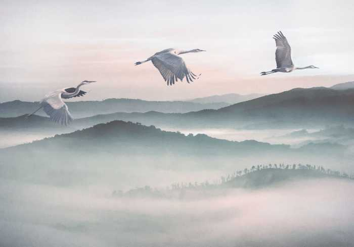 Digitaldrucktapete Mystic Cranes