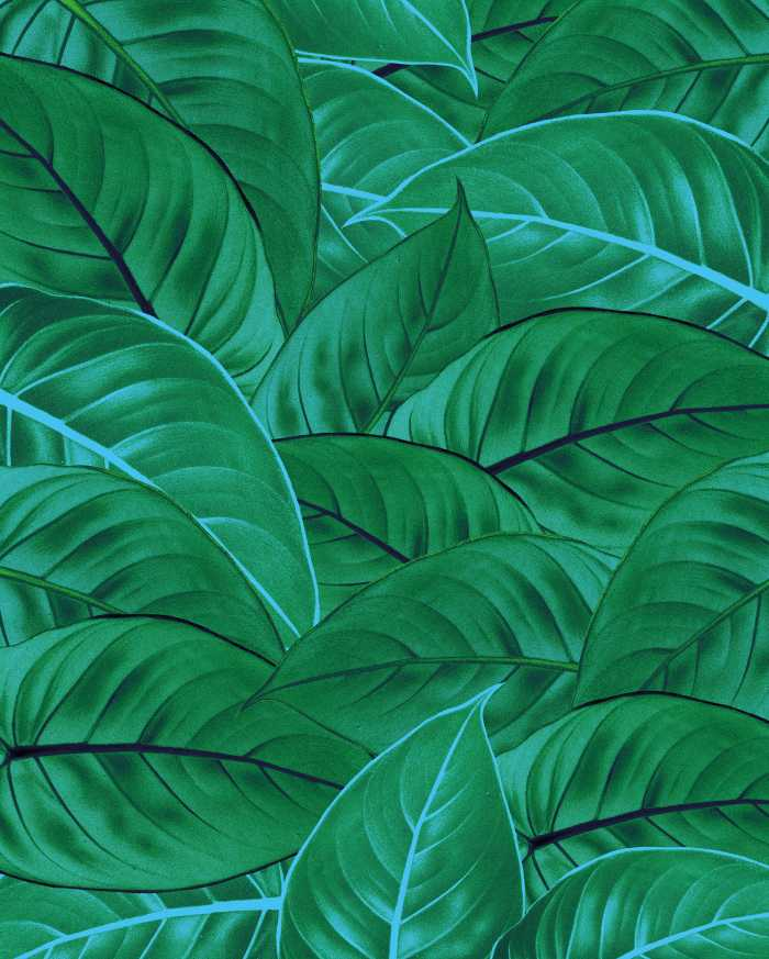 Digitaldrucktapete Jungle Leaves