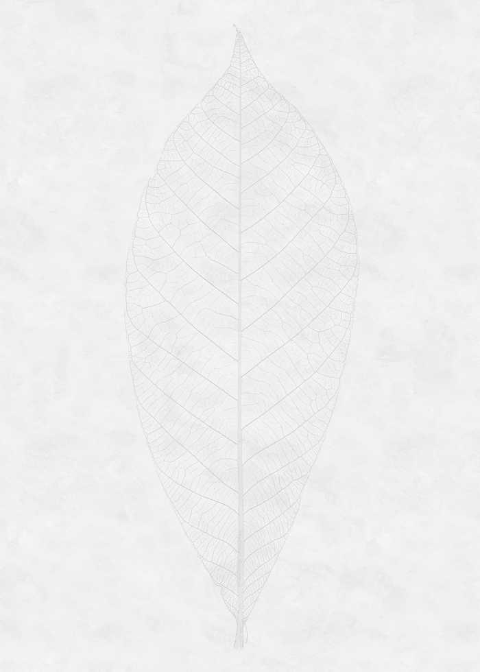 Digitaldrucktapete Decent Leaf