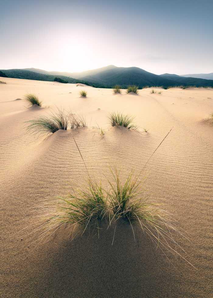Digitaldrucktapete Vivid Dunes