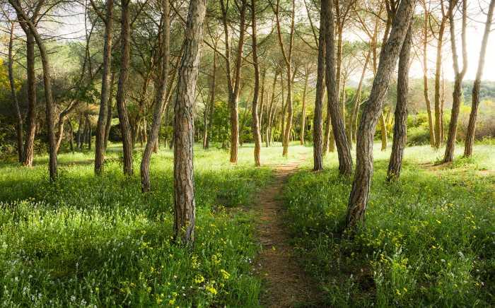 Digitaldrucktapete Blütenzauberwald