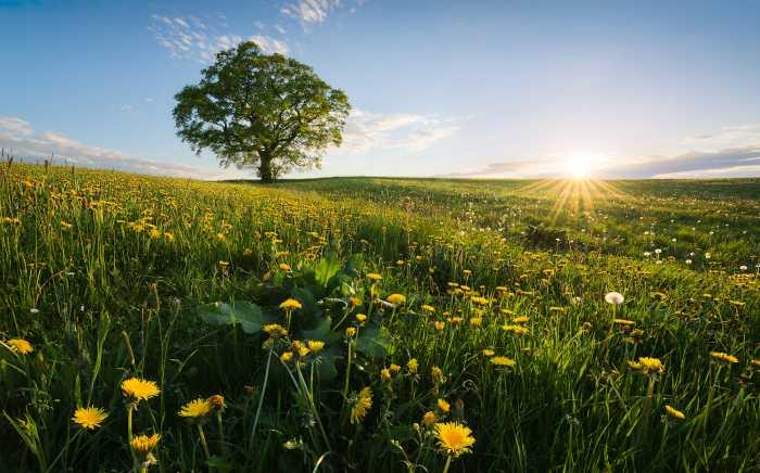 Digitaldrucktapete Frühling auf dem Land