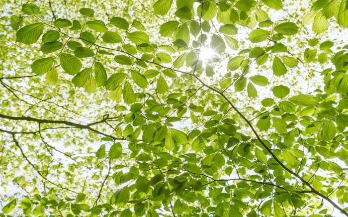 Digitaldrucktapete Im Frühlingswald