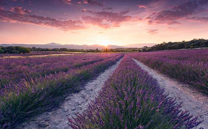 Digitaldrucktapete Lavender Dream