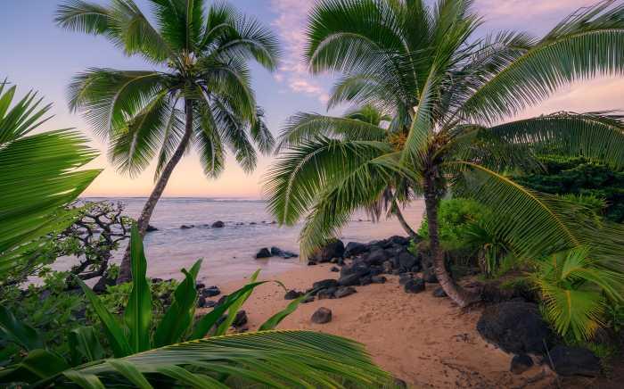 Digitaldrucktapete Hawaiian Dreams