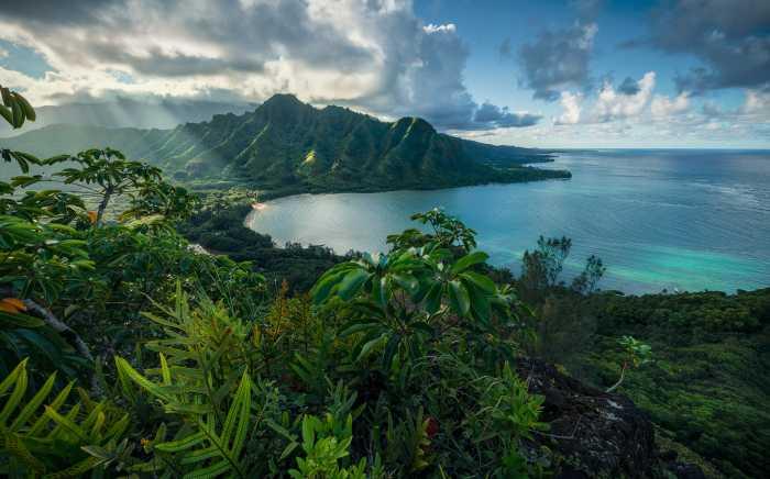 Digitaldrucktapete Jurassic Island