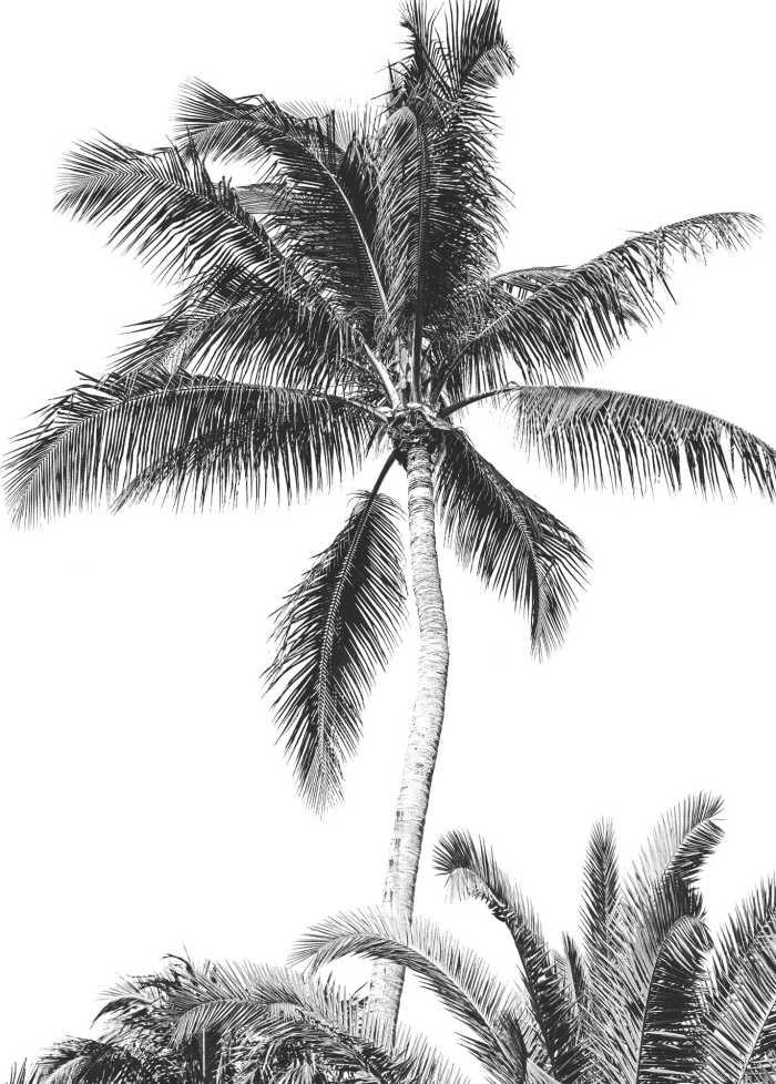 Digitaldrucktapete Retro Palm