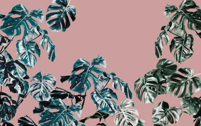 Digitaldrucktapete Monstera Rosé