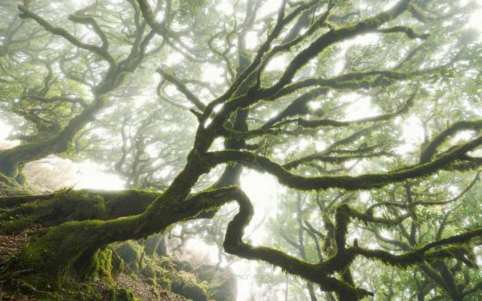 Digitaldrucktapete The Forgotten Forest