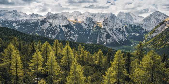 Panel Wild Dolomites