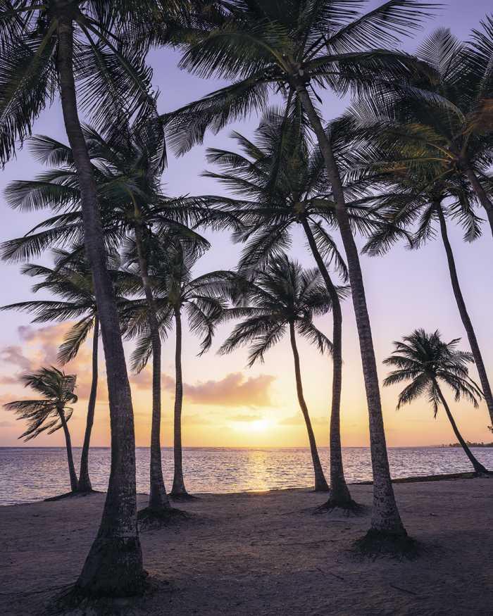 Digitaldrucktapete Palmtrees on Beach