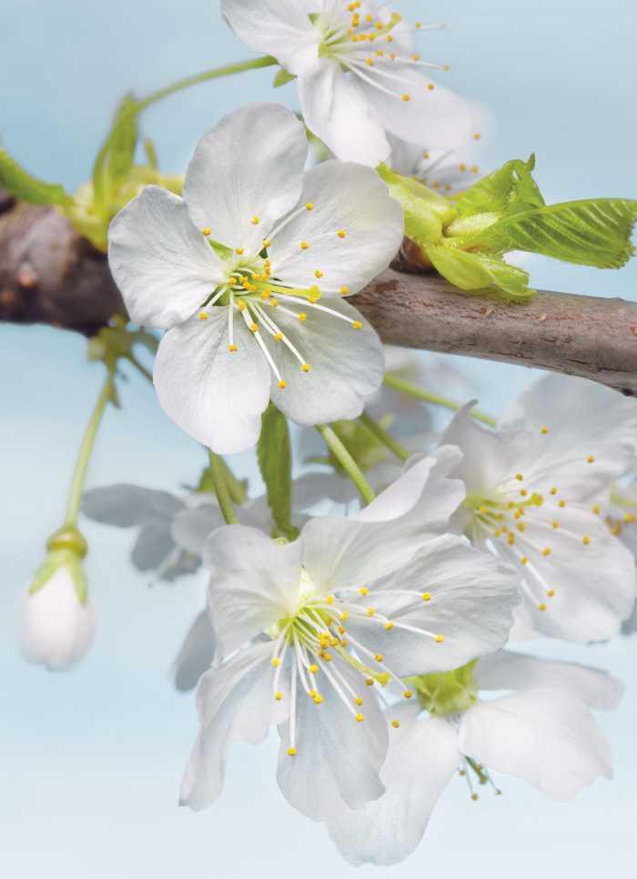 Vliestapete Blossom