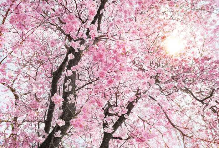 Vliestapete Bloom