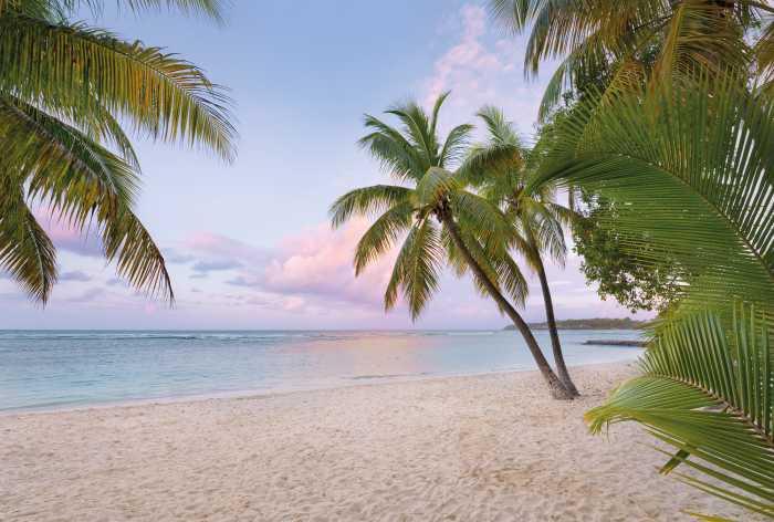 Vliestapete Paradise Morning