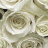 A la Rose