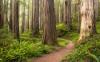 Redwood Trail