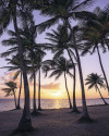 Palmtrees on Beach