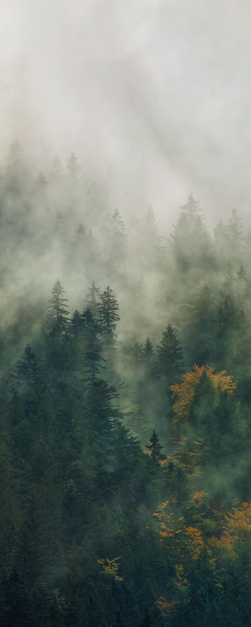 Tales of the Carpathians