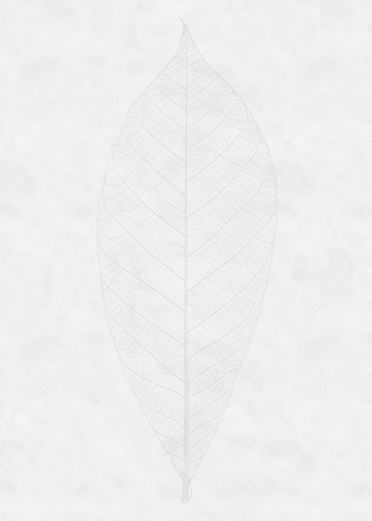 Decent Leaf