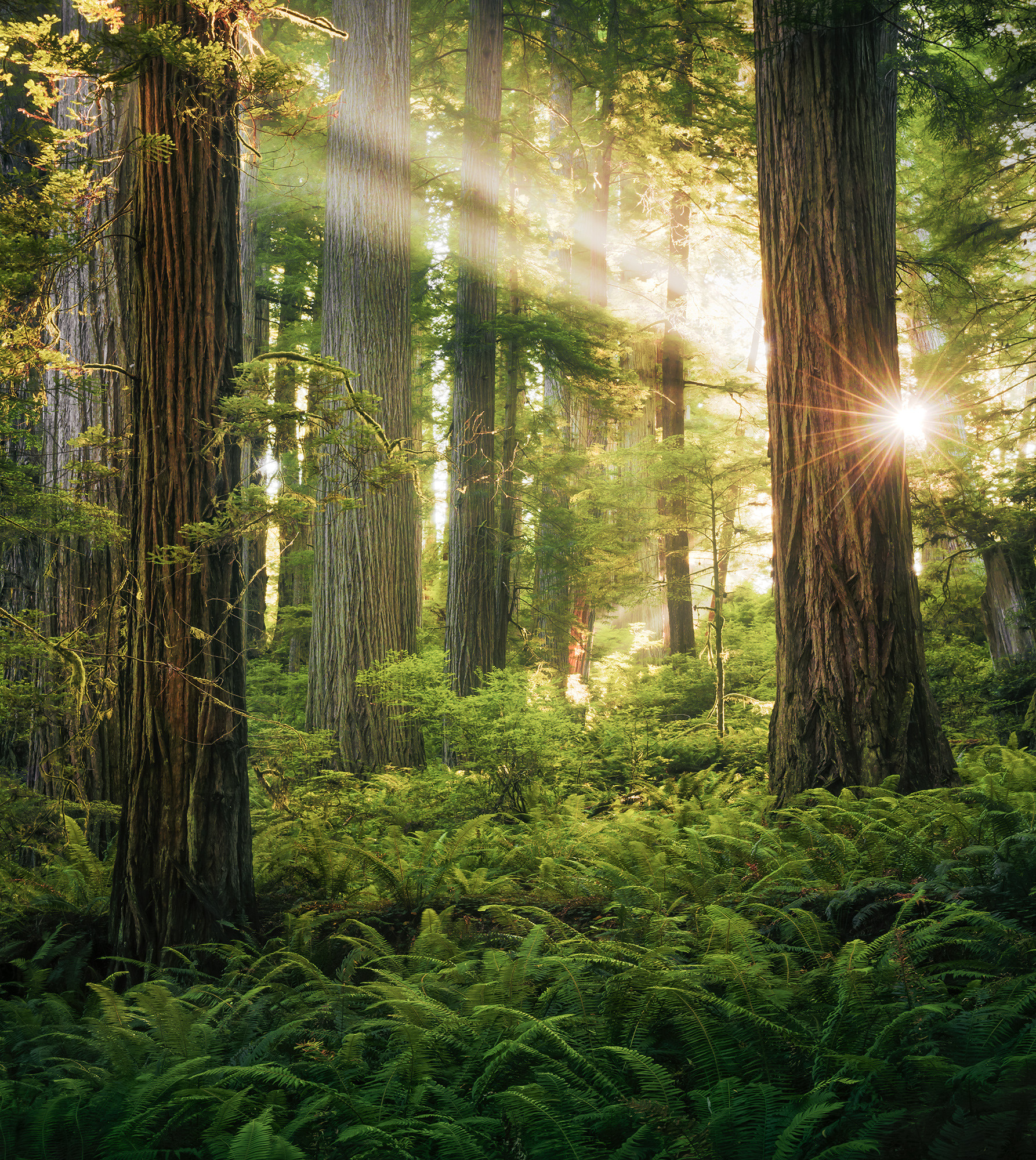 Goblins Woods