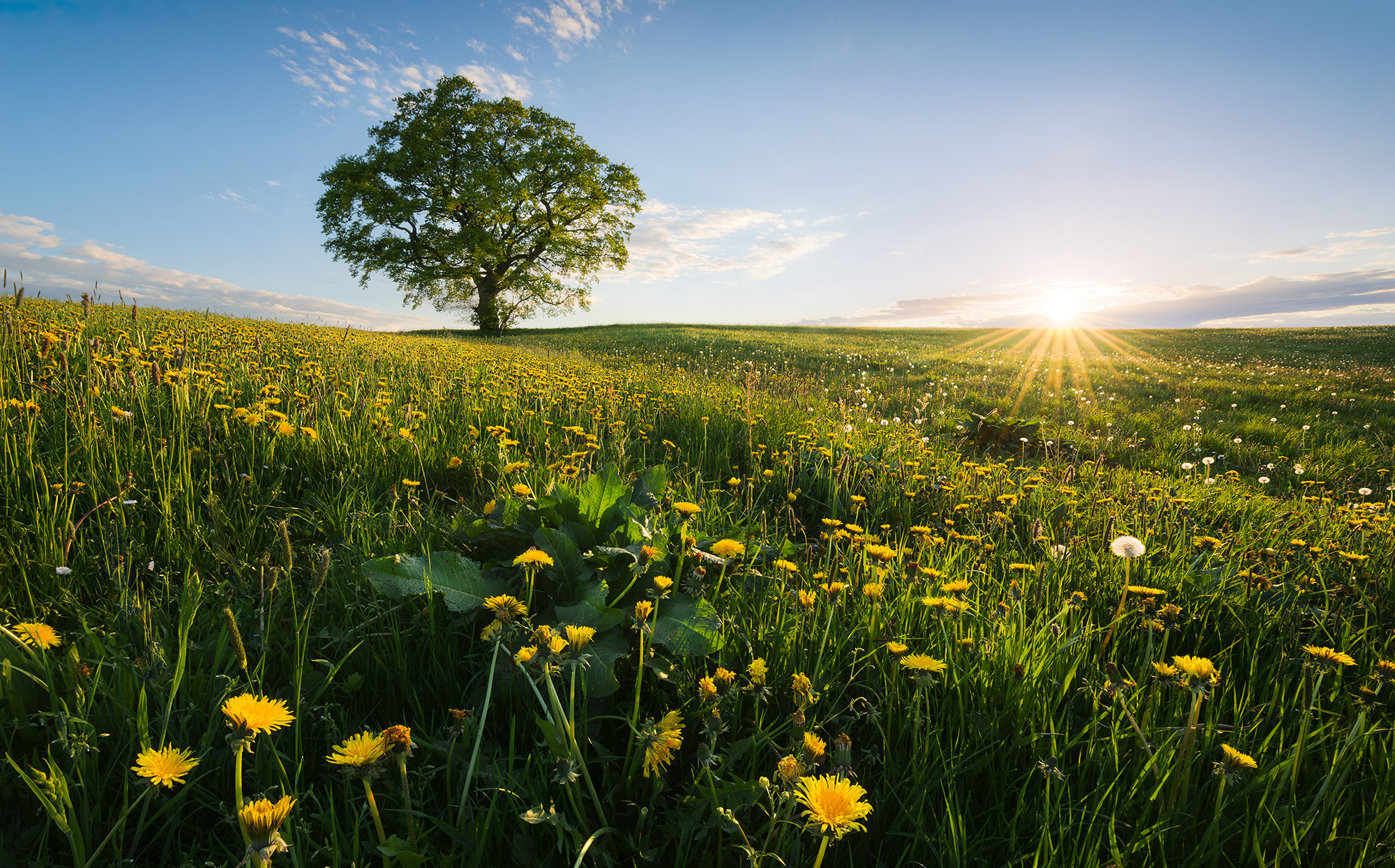 Frühling auf dem Land