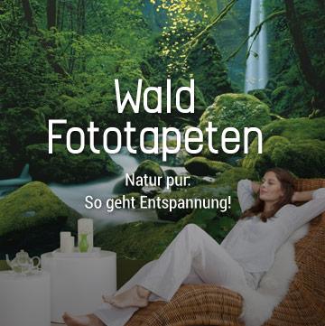 Wald Fototapeten: Natur pur. So geht Entspannung